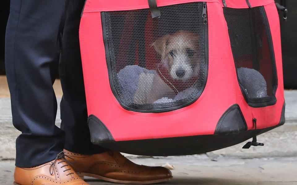 Премьер-министр Великобритании взял щенка изприюта. Теперь питомец живет вего резиденции наДаунинг-стрит