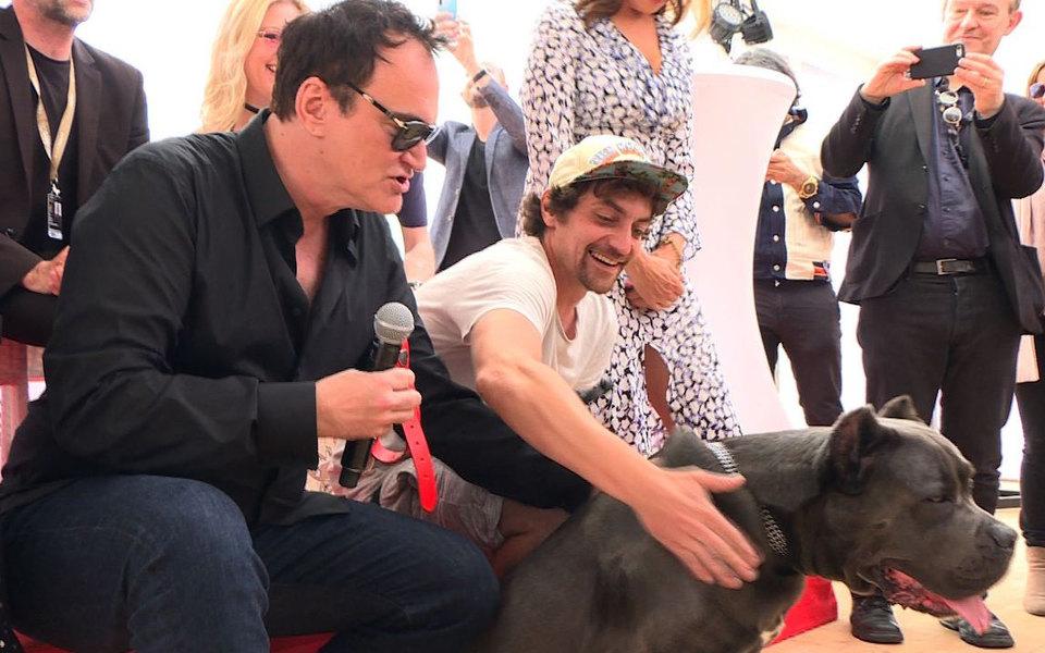 Питбуль из«Однажды... вГолливуде» получил «Собачью пальмовую ветвь»