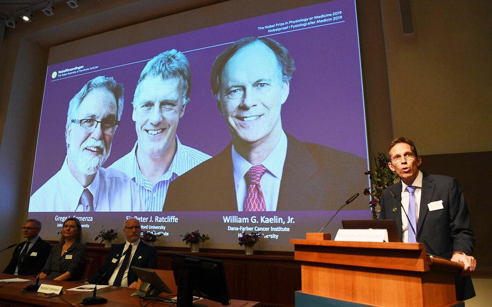 Нобелевскую премию помедицине присудили заисследование адаптации клеток кнедостатку кислорода