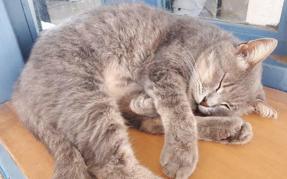 Коты — самые целеустремленные животные на свете. И вот 13 фотодоказательств