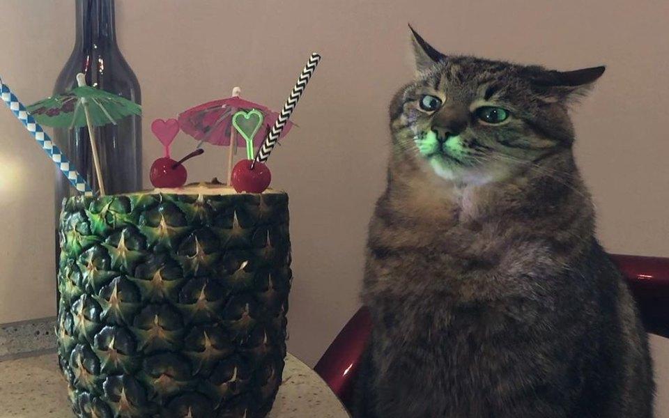 Новая звезда TikTok: кот Степан сидит застолом сочередным бокалом напитка исмотрит вдаль. Его мордочка выражает вселенскую грусть (или раздражение)