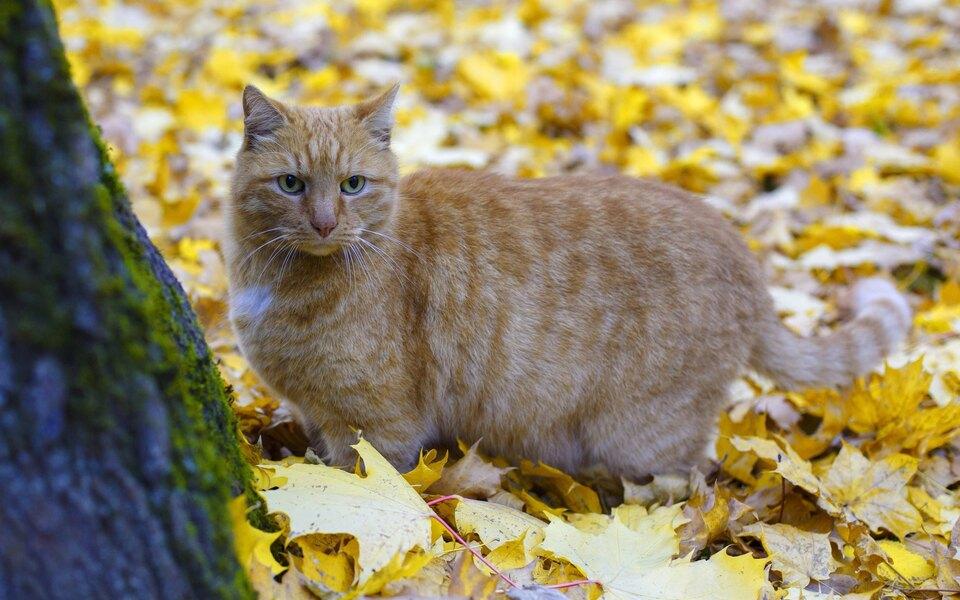 Пропавшего кота Осю вернули в петербургский музей Анны Ахматовой