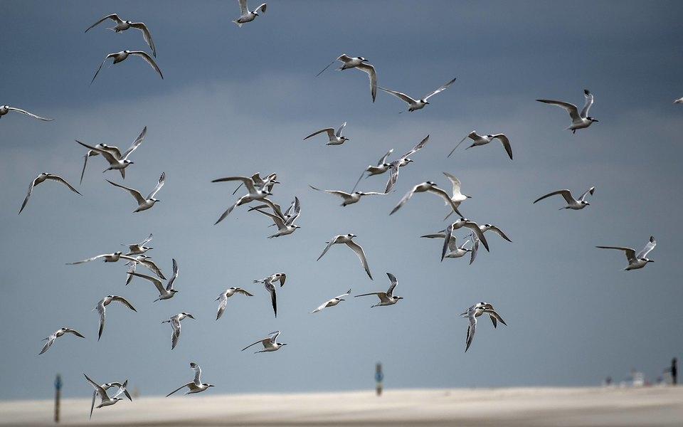 Росприроднадзор подтвердил, что около аэропорта Жуковский есть нелегальная свалка. Она привлекает птиц