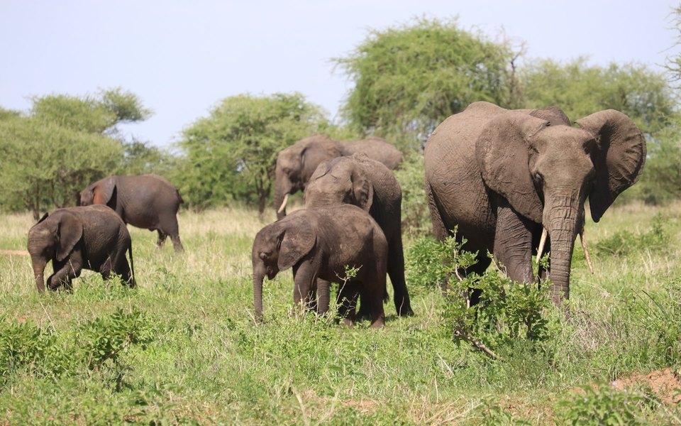 Власти Ботсваны объяснили гибель более 300 слонов изменением климата