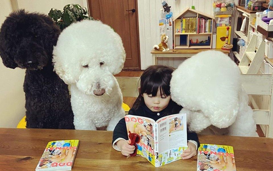 В Японии девочка с рождения дружит с пуделями. Посмотрите на эти милые фотографии