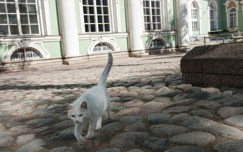 Миру — мур! Эрмитаж снял видео о жизни музейных котов в изоляции