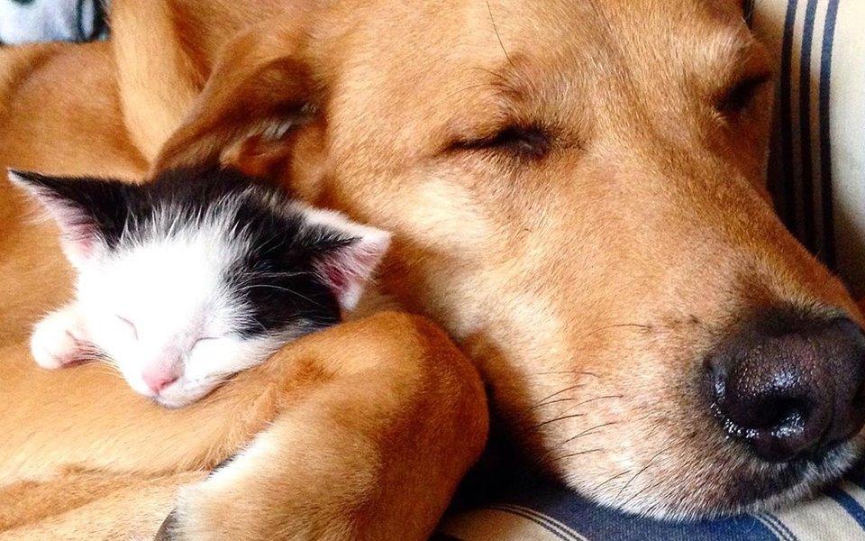 Верите ли вы в дружбу между собакой и кошкой? Посмотрите на дворняжку, которая заботится о котятах