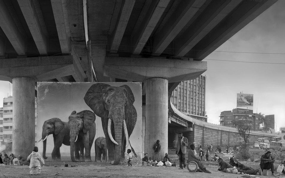 5 любимых фотографий Ника Брандта