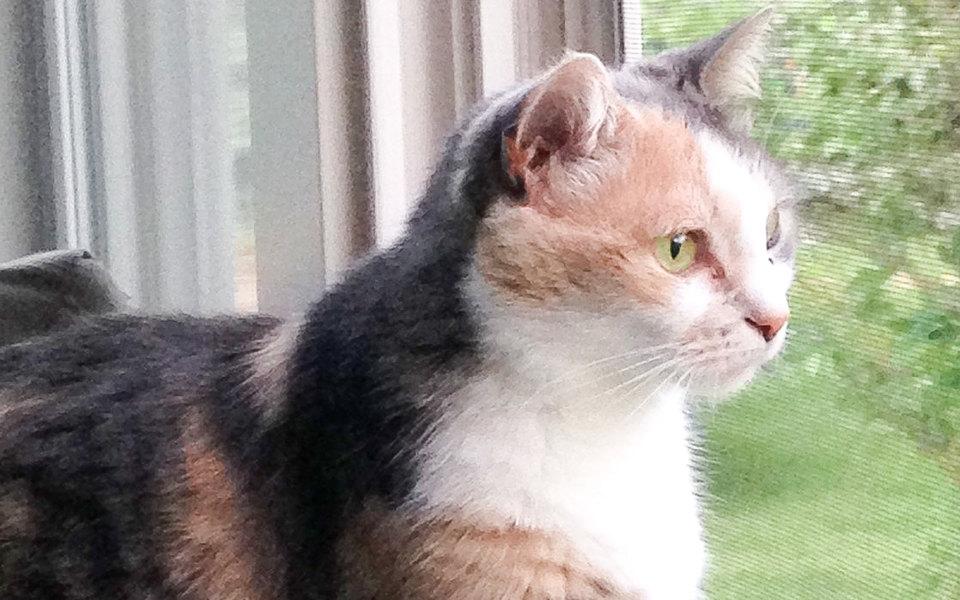 В США женщина похоронила свою кошку. Но через некоторое время та вернулась домой