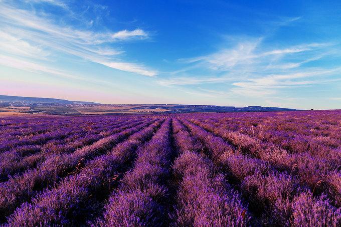 Прекрасное лавандовое поле. Где оно?