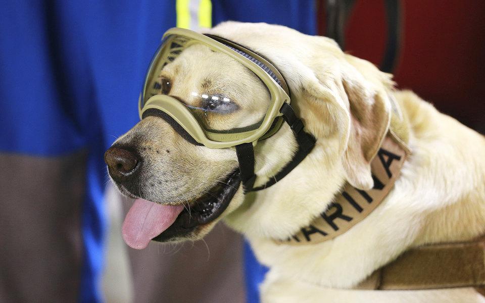 Посмотрите напортреты собак-спасателей вобъективе мексиканского фотографа