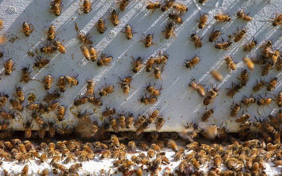 Профессор зоологии стал рок-музыкантом, чтобы спасти пчел отвымирания