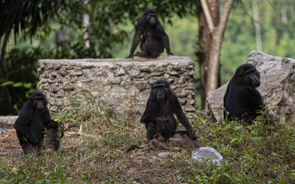 Агрессивные обезьяны нападают на жителей индийской деревни. Местные решили переодеться медведями, чтобы отпугнуть животных (и это сработало)