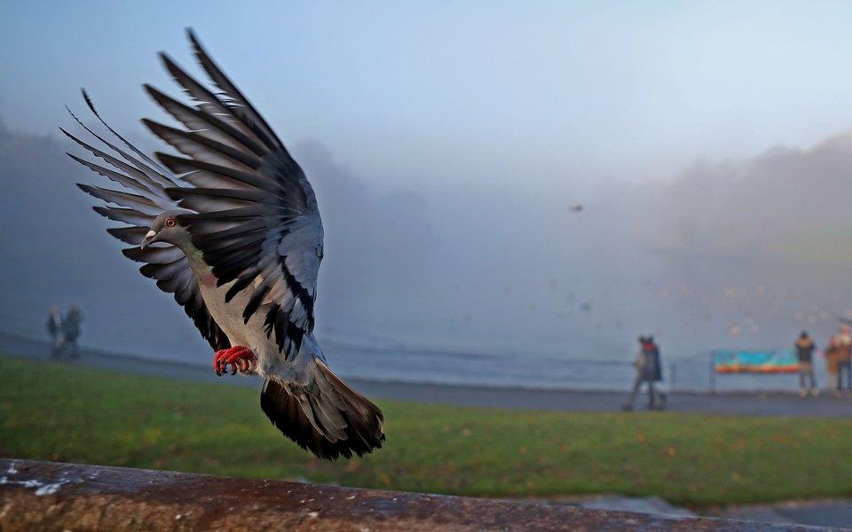ЦРУ рассекретило информацию омиссиях голубей-шпионов времен холодной войны