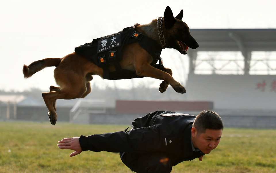 В Китае клонировали полицейскую собаку. Теперь этот процесс хотят поставить напоток