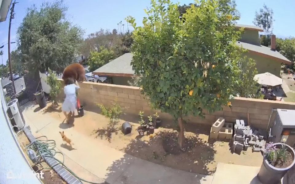 В Калифорнии женщина столкнула с забора медведя, который пытался проникнуть на территорию дома