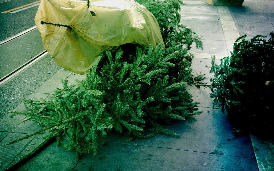 «Новогодний подарок»: рассказ Александра Цыпкина