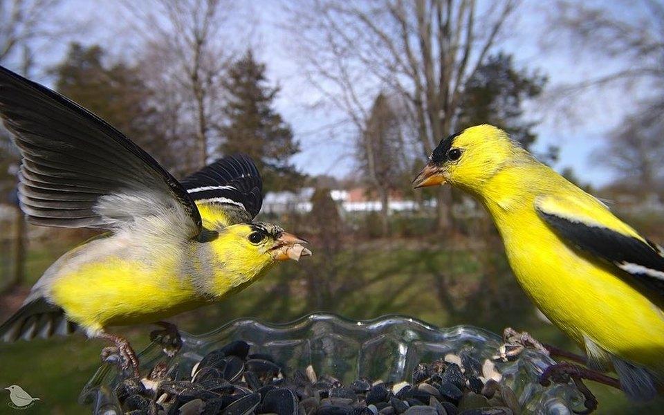 В США женщина установила камеру накормушку. Теперь каждый день там фотографируются сотни птиц