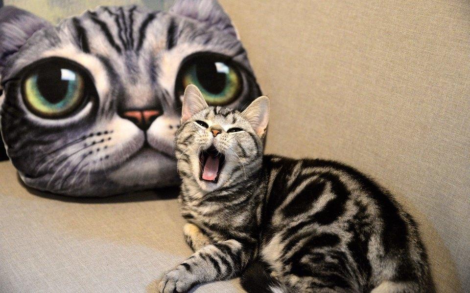 Китайская компания клонировала котенка. Теперь она планирует продавать клонированных животных